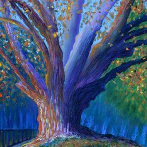 Tree on Sunset Hill