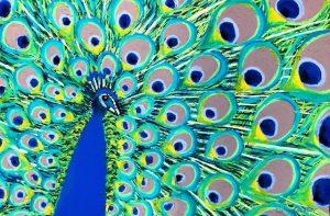 Zoe (pastel) by Polly Castor